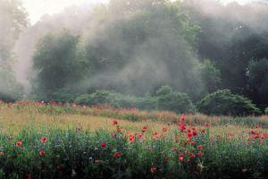 Pascal-Cribier-jardin-normandie-brume