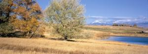 Cribier-montana-ranch-cense-dillon