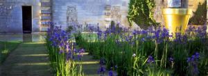 cribier-iris-donjon-de-vez