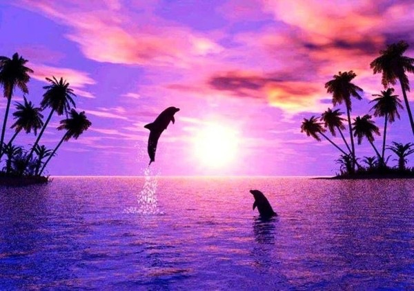 coucher-soleil-dauphins