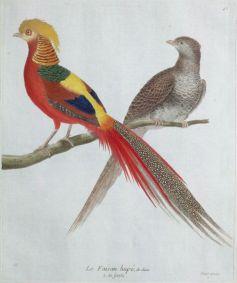 Gravure_ancienne_oiseau_par_Martinet_-_faisan_hupe_de_Chine_male_et_femelle